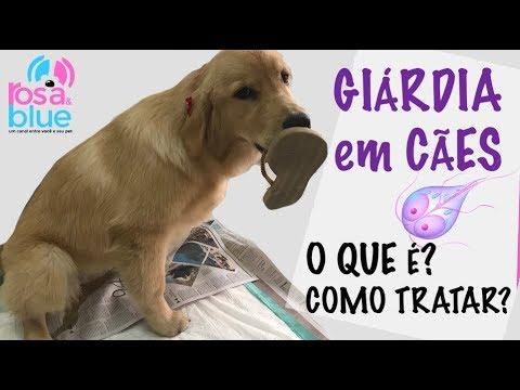 bacteria giardia em cachorro