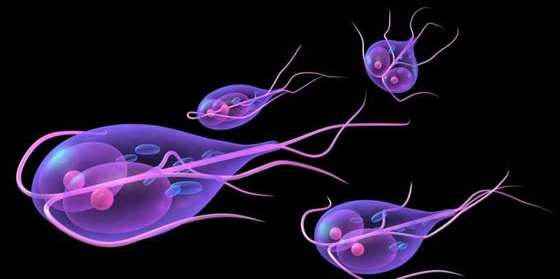 antimikrobiális és parazitaellenes szerek férgek újszülöttekben