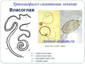 antihelmintikus gyógyszerek drontal giardiasis vermox