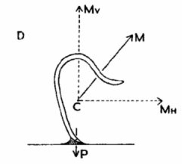 Pinworm életciklus-diagram Pinworm életciklus diagram