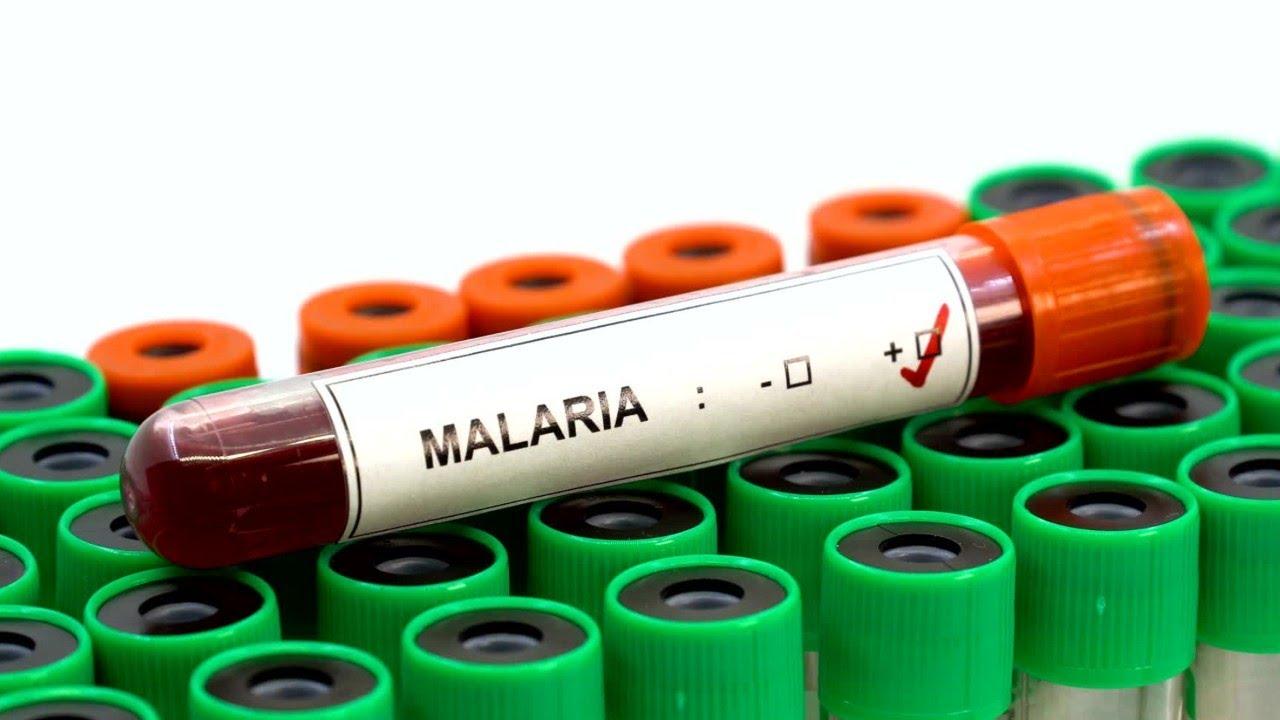 A malária parazita szaporodása. Hol fordul elő?