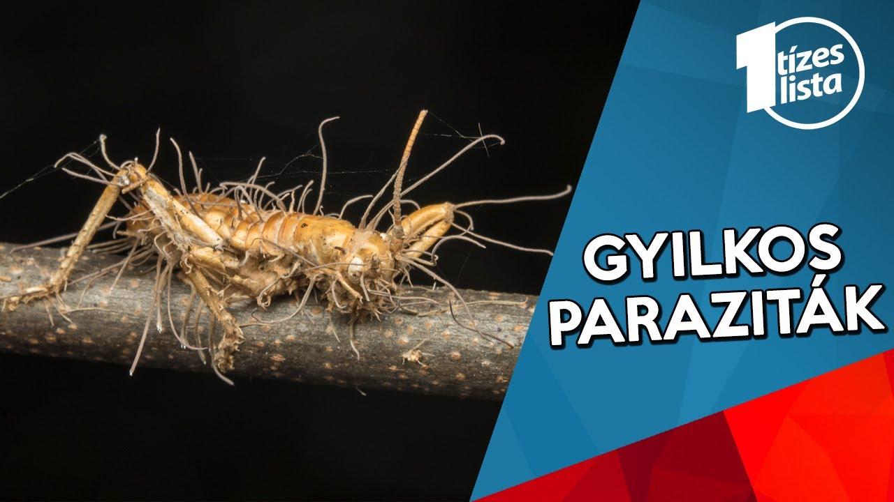 az észlelt rovar paraziták megsemmisítése