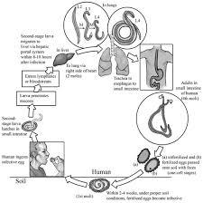 elősegíti a parazitakezelést az aceton szagának megjelenése a szájból