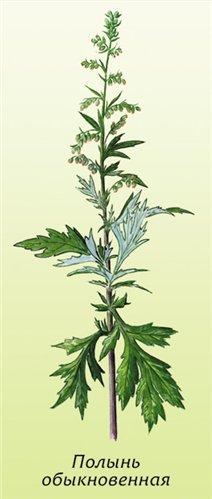 fű üröm keserű férgek giardiasis betegség