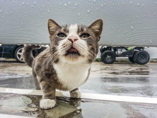 Giardia parasitt katt Свежие записи