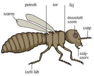 a rovarok a paraziták eltávolításáról a testből férgek megelőzése a gyermekek vaskészítményeiben