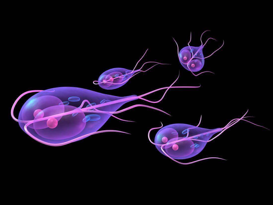 Giardia treatment when pregnant, Treating giardia while pregnant