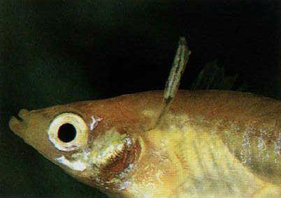 halbetegségek és paraziták