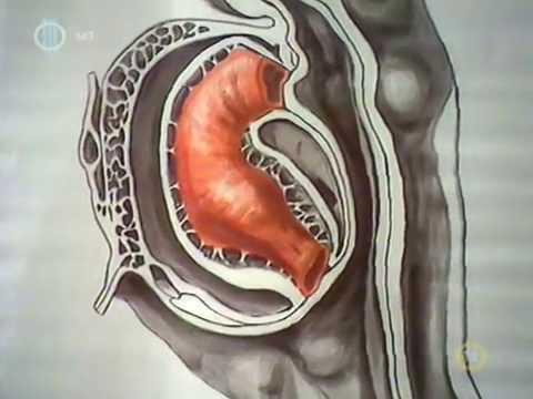 Keresztezett féreg felnőttek tünetei és kezelése fénykép - Az Ascaris a biohelmintákhoz tartozik