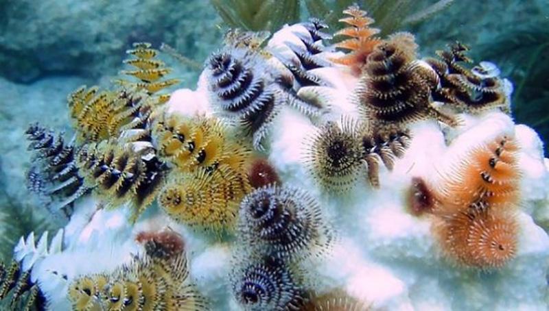 tengeri férgek