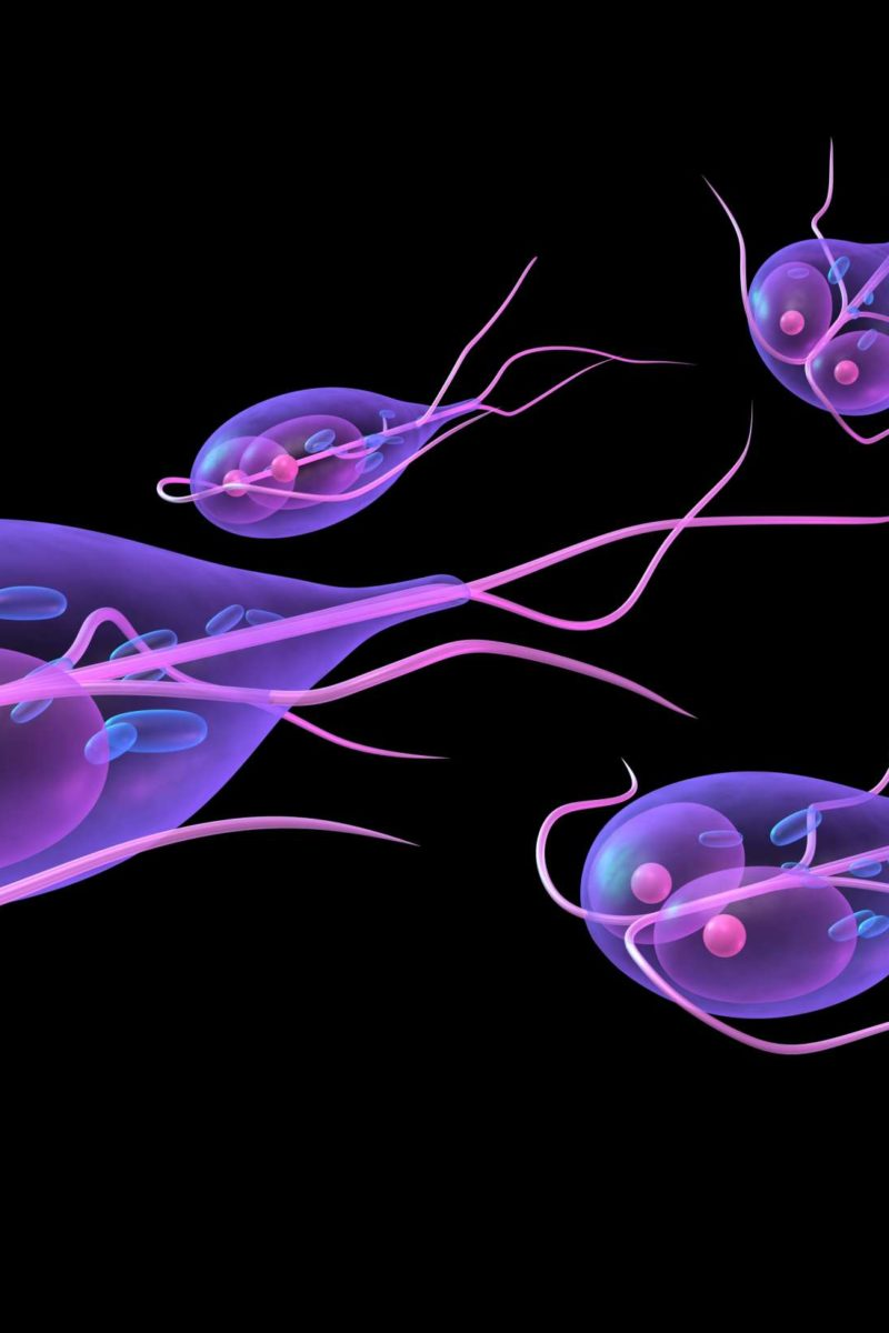 How long does giardia last after treatment