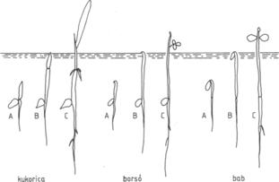 Helminták féregkezelés. Paraziták béltisztítása Dzsingisz-kán módszer áttekintése