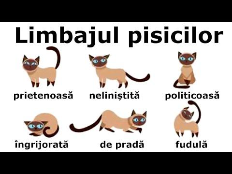 giardia la pisici simptome