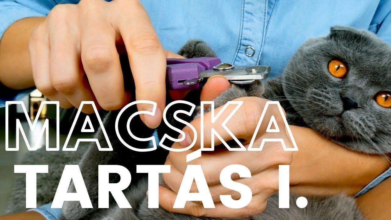 tabletták férgek számára, melyik macska jobb