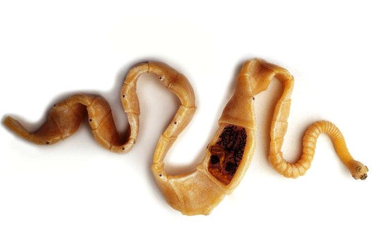 tabletták a paraziták nevét paraziták kerekféreg alternatív kezelése