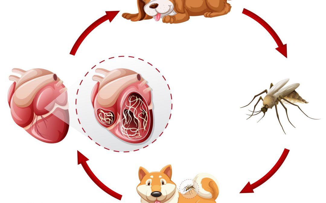 az antihelminthikus gyógyszerek megfelelő szedése férgek gyermekekben, mint kezelni
