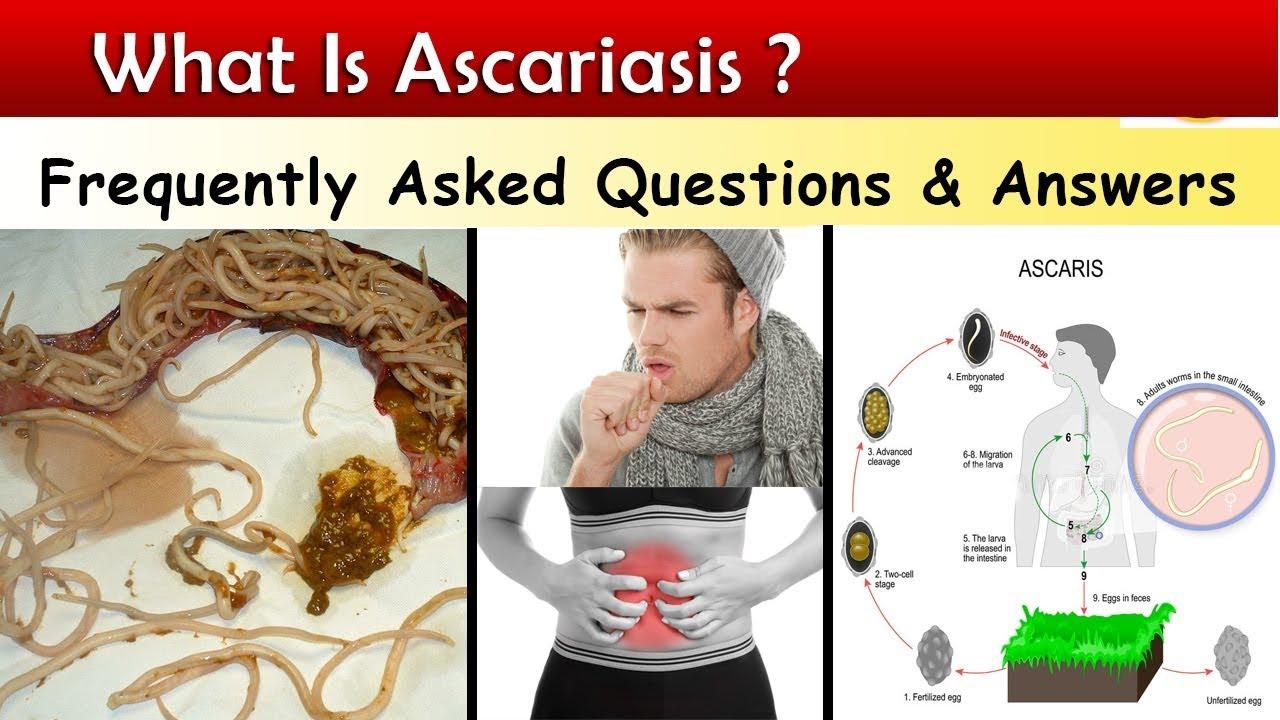 Ascaris tenyésztési ciklus - Ascaris típusú fejlődés