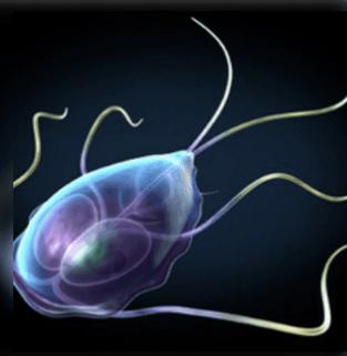hogyan lehet megszabadulni a parazitáktól otthoni módszerrel