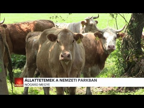 tabletták szarvasmarhák számára férgektől