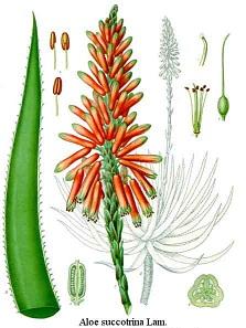 Aloe parazitákkal történő kezelés