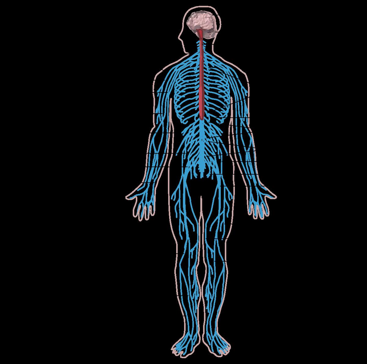 az emberi test parazitainak hatekony gyogymodja