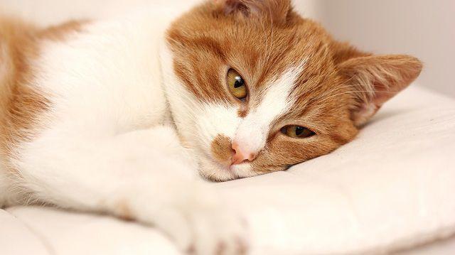 férges macska kezelése helminták megjelenése