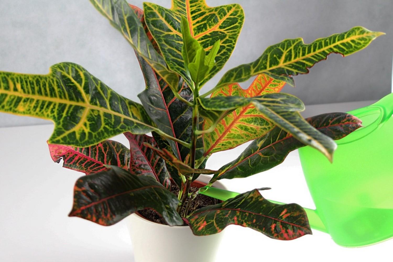 fertőzött virágföld? | andrea-design.hu - Gyógynövények a beltéri növények parazitáira