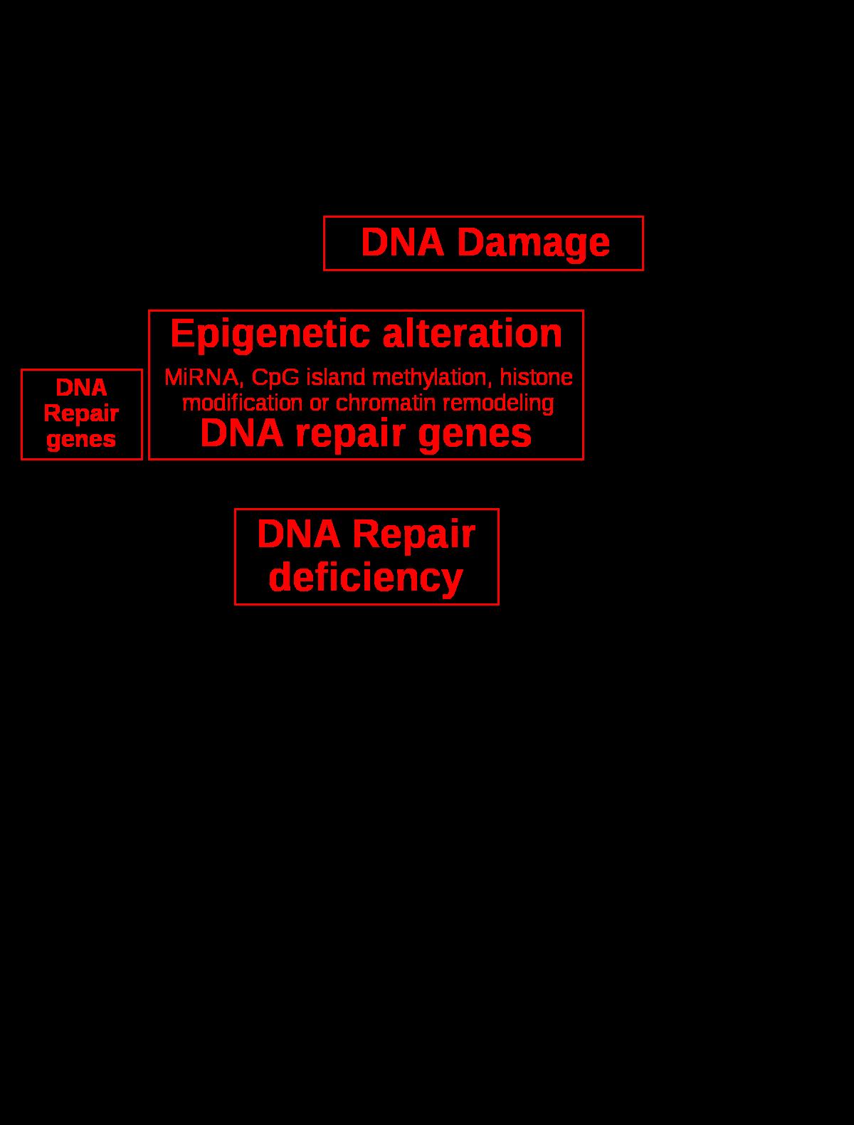 Parazita orvoslás összetétele