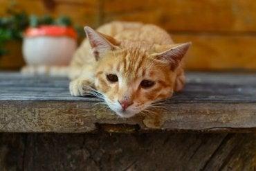 giardia kot leczenie rossz lehelet, ha a belek fájnak