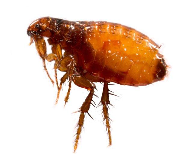gyógyítsuk meg a parazitákat hamuval gyógyítsa meg a férgeket otthon