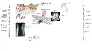 krónikus helminthiasis gyermekeknél