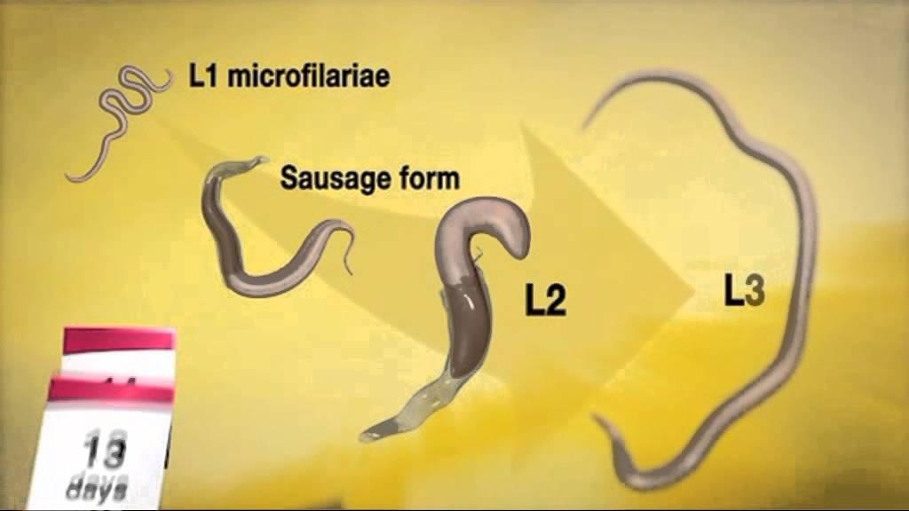 Mellékhatás a paraziták kezeléséből