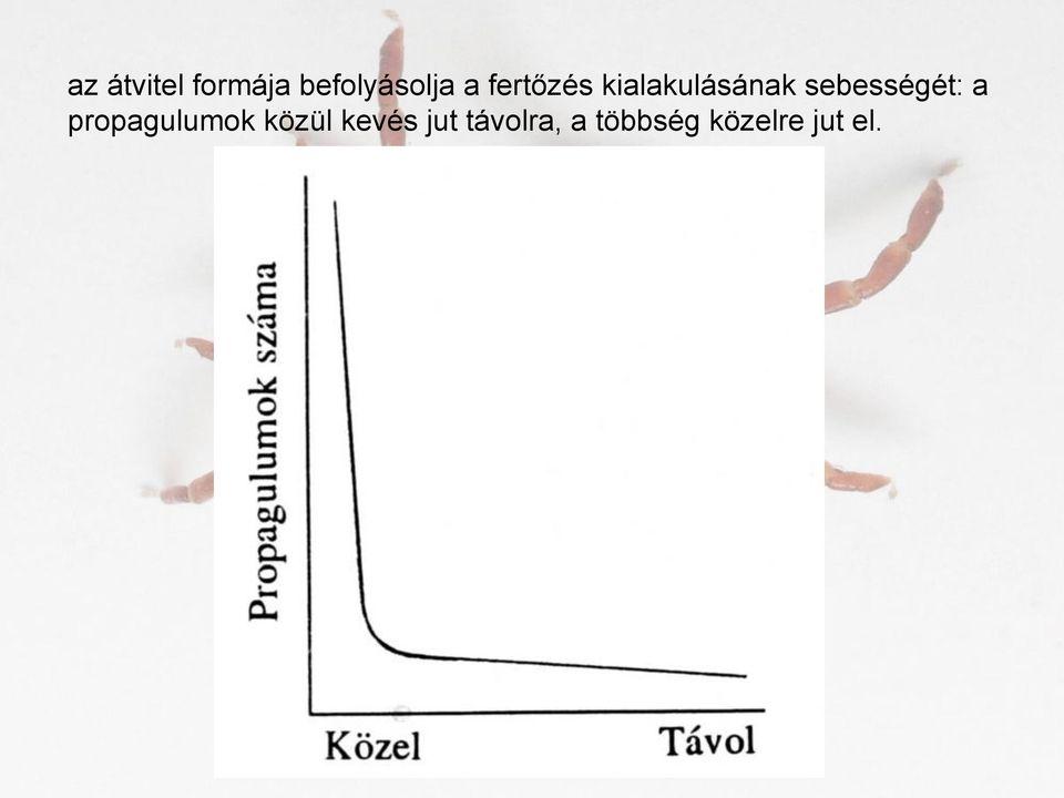 parazita átvitel belfereg gyogyszer
