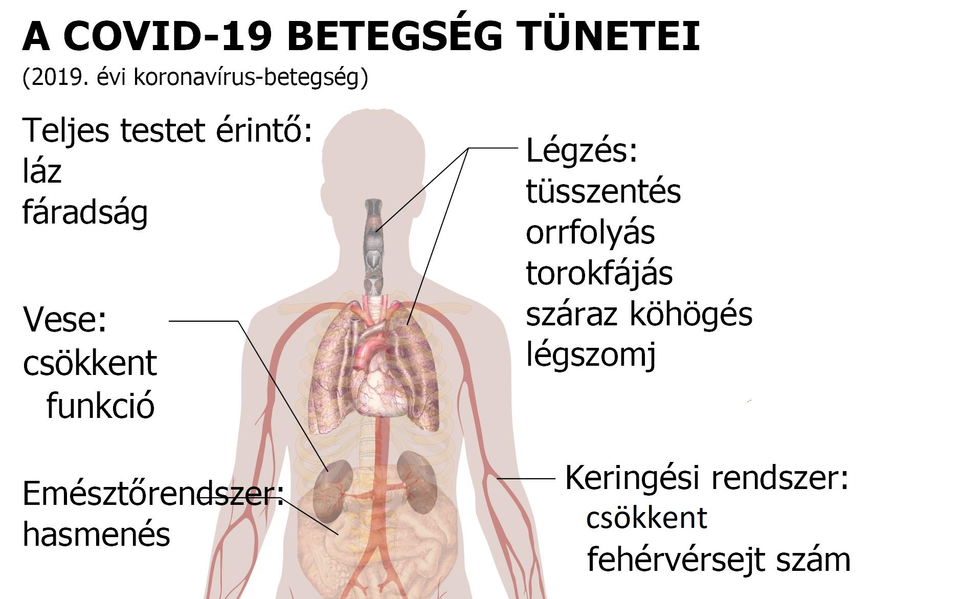 Paraziták tünetei a fejben. A Magyarországon előforduló féregfertőzések