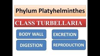 platyhelminthes embriológiai csírarétegek