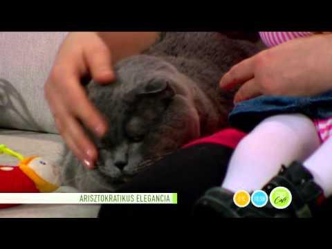 tabletták férgek számára egy macskának, amely jobb