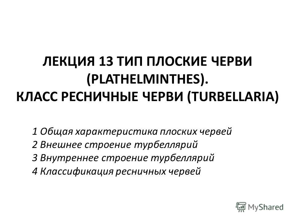 tricladida plathelminthen