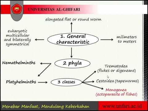 galandféreg táplálja helminth invázió jellemző