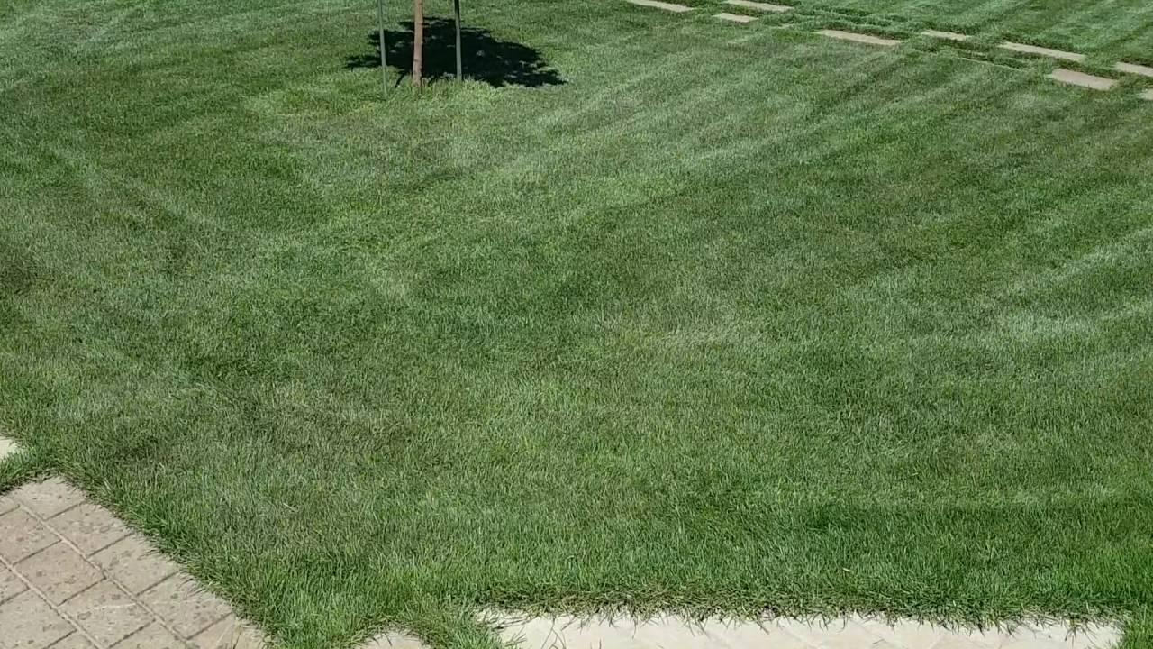A fű eltávolítja a férgeket, Gyakori megbetegedések