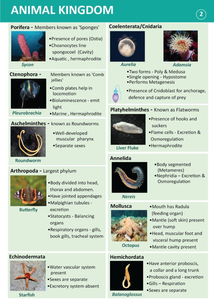 phylum platyhelminthes coelom típus